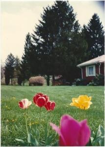 PA in spring