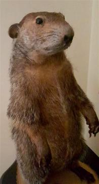 Edited Groundhog